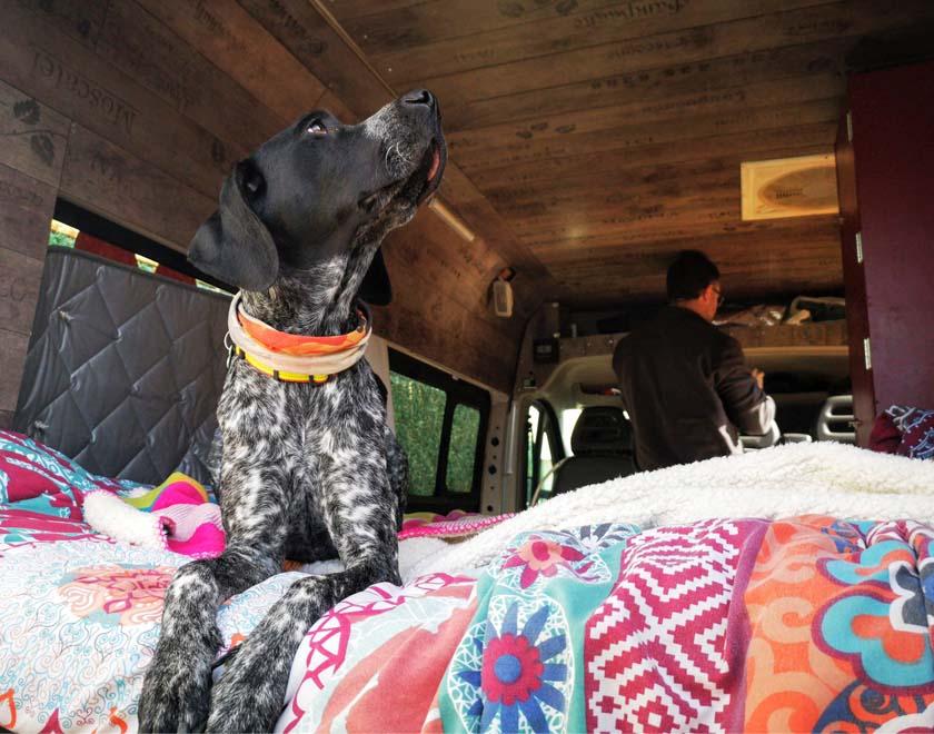 perro-en-furgo-viajando