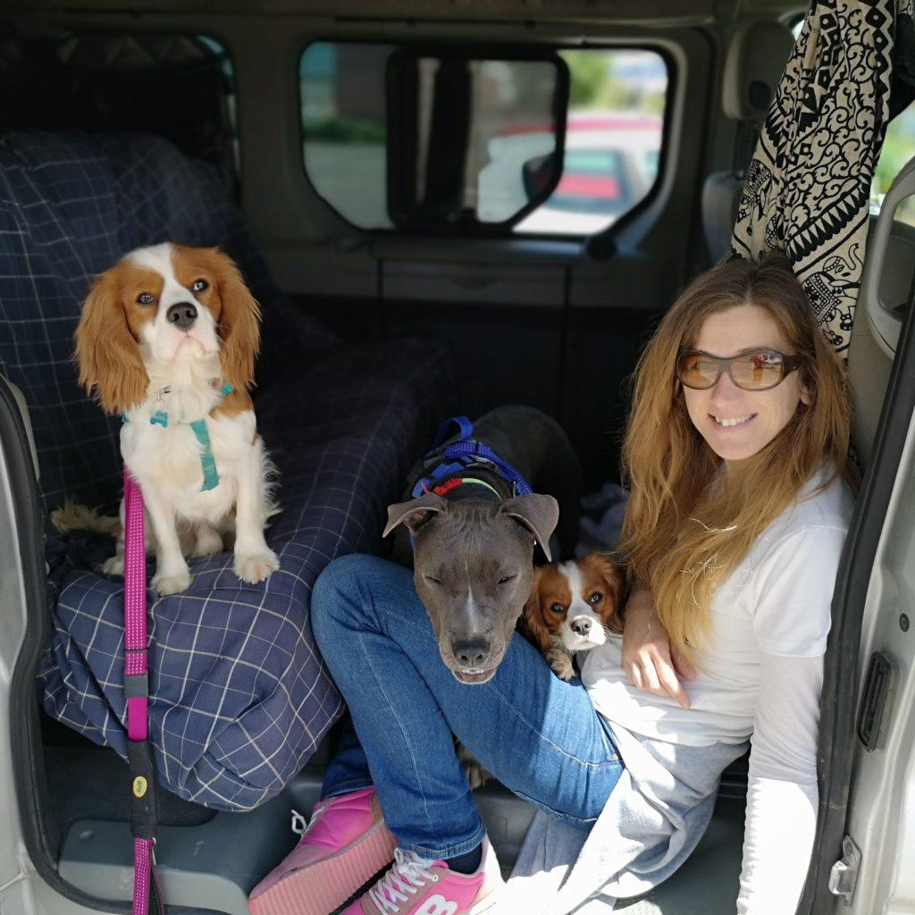 viajando-con-perros-iv