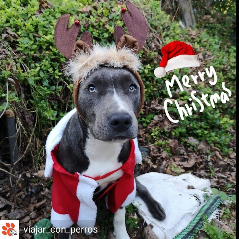 lo mejor de la Navidad